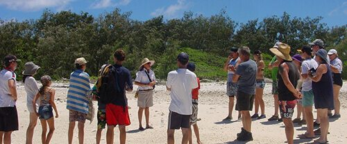 Guided Nature Walks - Lady Musgrave Island