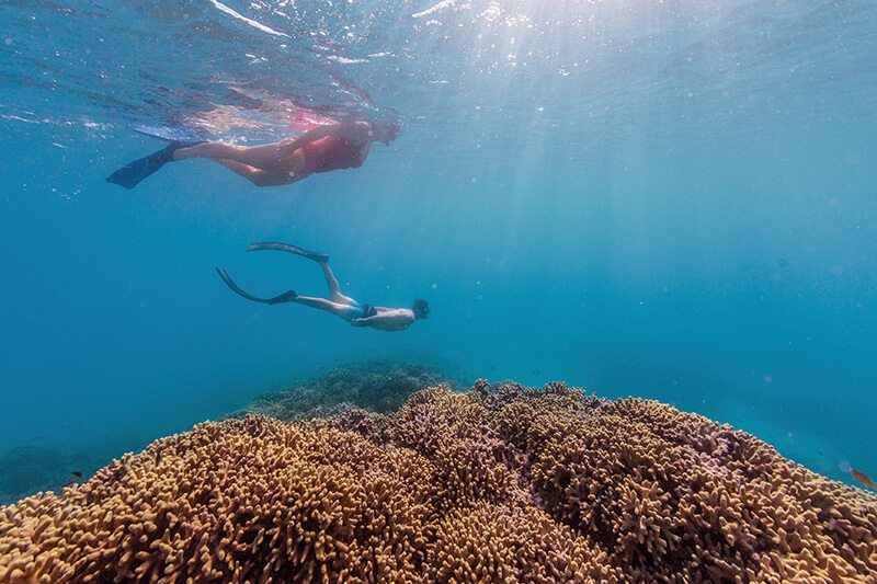 Snorkelling Bombie Great Barrier Reef
