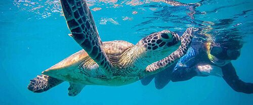 Swim With Turtles - Lady Musgrave Experience
