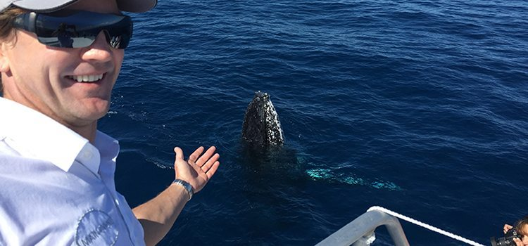 Whale Watching - Lady Musgrave Experience