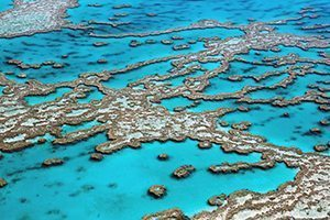 Coral - Great 8 - Southern Great Barrier Reef - Lady Musgrave Island Cruises