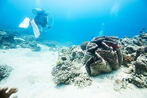 Giant Clams - Great 8 - Southern Great Barrier Reef - Lady Musgrave Island Cruises